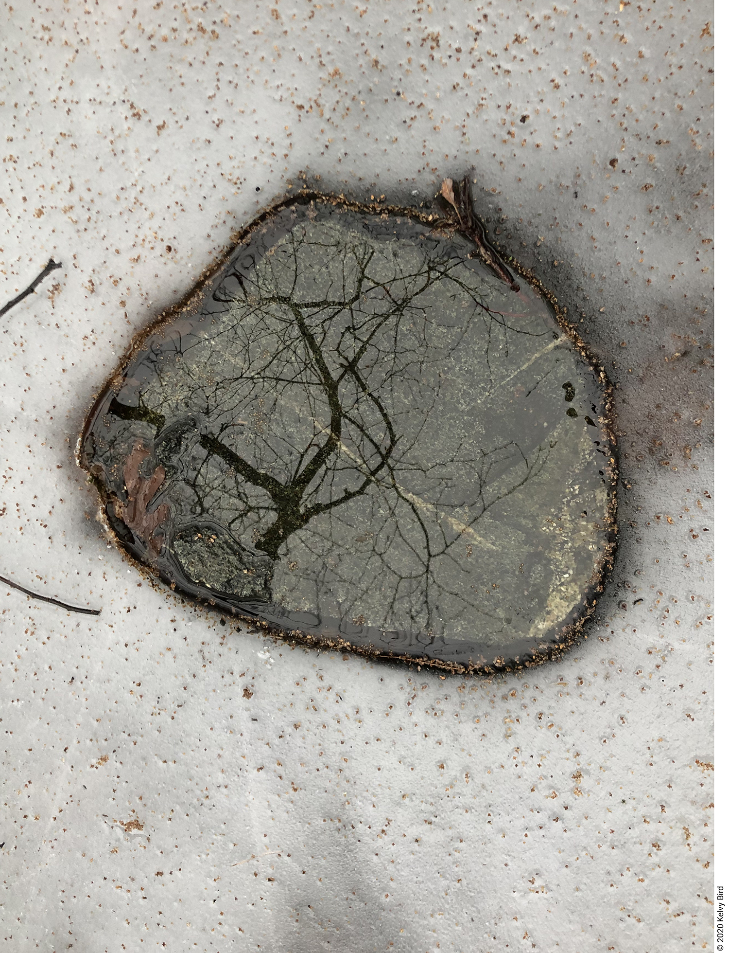A tree reflected in water over a rock in iced pond